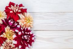 Image with dahlias. Bright dahlias on a wooden background. Copy and paste Stock Photo
