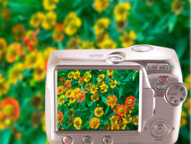Image daisies on the screen the camera. Colorful screen. Image daisies on the screen the camera royalty free stock photo