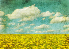 Image of dandelion field. Vintage image of dandelion field Stock Image