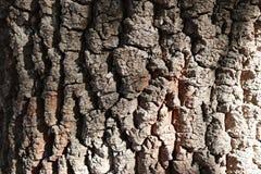 Dark Natural Wood Texture royalty free stock photography