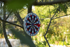 Image of Dart Board hanging on tree. Concept Royalty Free Stock Photo