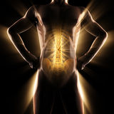 Image de balayage de radiographie d'os d'humain Image libre de droits