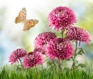 Image de beaucoup de fleurs et de papillons dans le plan rapproché de jardin Images stock