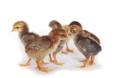 Image de bouillon de poulet de bébé Photo libre de droits