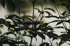 Image de brindille avec les feuilles vertes fraîches Images libres de droits
