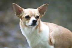 Image de chien image stock