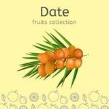 Image de collection de fruits illustration libre de droits