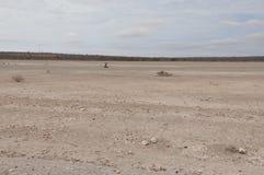 Image de désert d'Afrique de l'Est image libre de droits