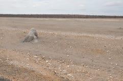 Image de désert d'Afrique de l'Est images stock