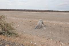 Image de désert d'Afrique de l'Est photographie stock