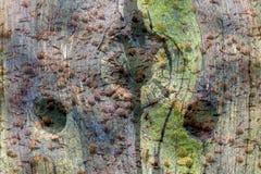 Image de double exposition avec de la glace congelée, l'mauvaise herbe de canard et un vieux poteau image stock