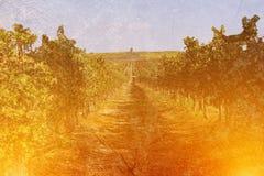 image de double exposition des rondins et des arbres en bois au coucher du soleil Photos libres de droits