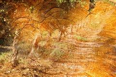 image de double exposition des rondins et des arbres en bois au coucher du soleil Photographie stock