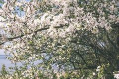 Image de feuillage tôt de ressort d'ivrogne - ressort vert vibrant frais Photo libre de droits