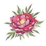 Image de fleur de pivoine Illustration d'aquarelle d'aspiration de main Photos stock