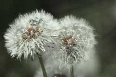 Image de flore et de faune dans le macro images libres de droits