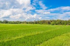 image de gisement de riz et de ciel bleu d'espace libre pour l'utilisation de fond Photographie stock libre de droits