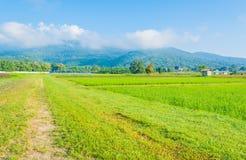 image de gisement de riz et de ciel bleu d'espace libre pour l'utilisation de fond Photo stock