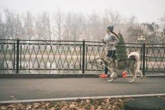 Image de jeune fille fonctionnant avec son chien, malamute d'Alaska Photographie stock