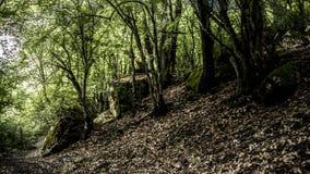 Image de la forêt déprimée foncée augmentant la voie photo stock
