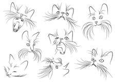 Image de museau de chat avec de longs favoris sur le CCB blanc Photographie stock