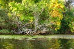 Image de paysage d'une grande végétation de rivage de rivière Photographie stock
