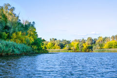 Image de paysage d'une grande végétation de rivage de rivière Images stock