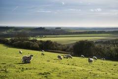 Image de paysage de Beauitful des agneaux et des moutons nouveau-nés de ressort dans f Photographie stock libre de droits