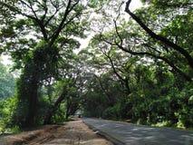 Image de paysage de voie verte parmi des arbres photographie stock libre de droits