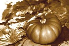 Image de sépia de thanksgiving avec le potiron et les feuilles d'automne Image libre de droits