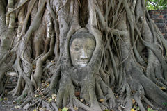 Image de tête de Bouddha chez Wat Mahathat à Ayutthaya Image stock