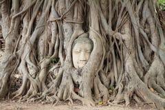 Image de tête de Bouddha chez Wat Mahathat à Ayutthaya Photos stock