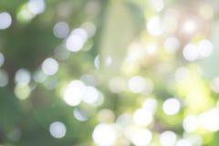 Image de tache floue de lumière coulant par des feuilles Photos stock