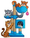 Image 1 de thème de chat Photographie stock libre de droits