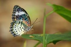 Image de Tiger Butterfly simple sur les feuilles vertes Animal d'insecte photos libres de droits