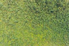 image de ton de vintage de mur de feuille Photo stock