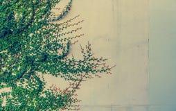 image de ton de vintage de mur de feuille Image stock