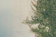 image de ton de vintage de mur de feuille Images libres de droits