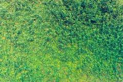 image de ton de vintage de mur de feuille Images stock