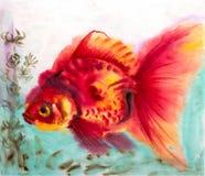 Image de vecteur basée sur un dessin d'aquarelle - poisson rouge Images libres de droits