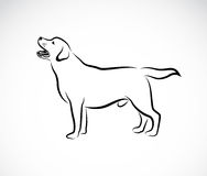 Image de vecteur d'un chien Labrador illustration de vecteur