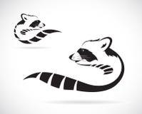 Image de vecteur d'un raton laveur Image libre de droits