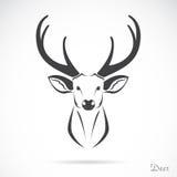 Image de vecteur d'une tête de cerfs communs Photo stock