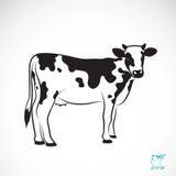 Image de vecteur d'une vache Image libre de droits