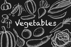Image de vecteur des légumes marqués à la craie sur un fond foncé Illustration de cru illustration stock