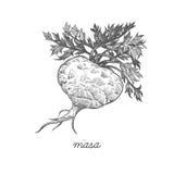 Image de vecteur des plantes médicinales illustration stock