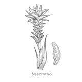 Image de vecteur des plantes médicinales illustration de vecteur