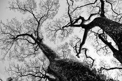 Image de Veille de la toussaint Forrest Images libres de droits