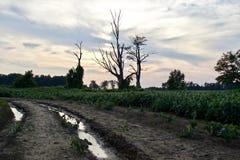 Image de vieux arbres étonnants et une route Image libre de droits