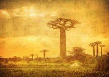 Image de vintage d'avenue de baobabs, Madagascar Photographie stock libre de droits